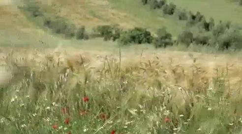 video_drago